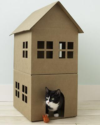 modern cat 008