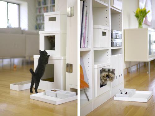 modern cat 009