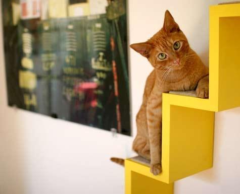 modern cat 2 002