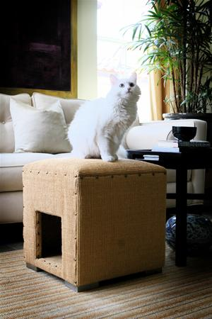modern cat 3 002