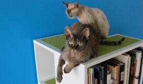 Biblioteca cu pisici.